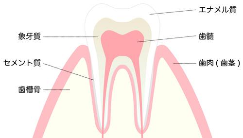 歯に着色汚れが起こる仕組み