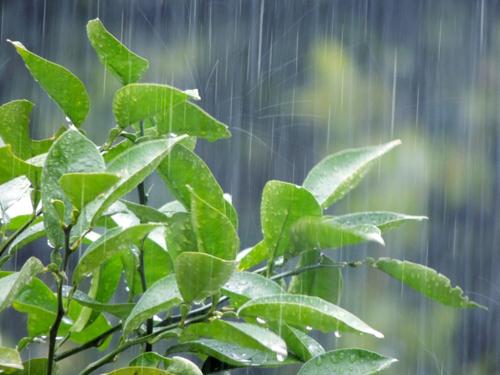 梅雨時に肌トラブルが起こりやすい要因
